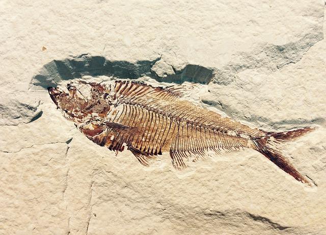 zkamenělá ryba