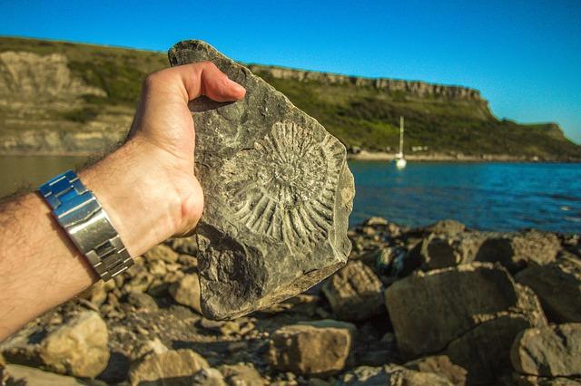 zkamenělina v ruce
